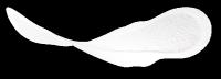 Serviettes Ultra lights by TENA avec ailettes – fines et discrètes